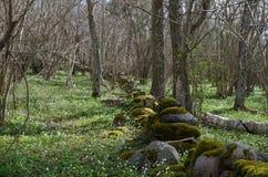 Bemoste steenmuur bij de lente stock fotografie