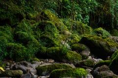 Bemoste stenen in weinig rivier royalty-vrije stock afbeeldingen