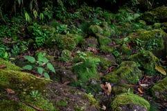 Bemoste stenen in weinig rivier royalty-vrije stock foto
