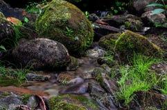 Bemoste stenen in weinig rivier stock foto's