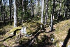 Bemoste stenen in Zweeds bos Royalty-vrije Stock Fotografie