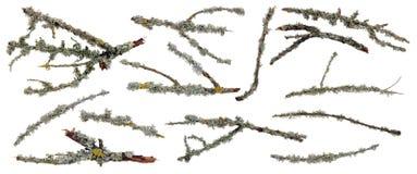 Bemoste takken van bosbomen voor Halloween-collagen royalty-vrije stock afbeelding