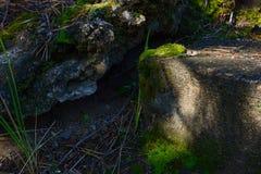 Bemoste trede en zonlicht Stock Foto