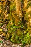 Bemoste Valleisleep van Bomen, Rotsen en Vegetatie Stock Foto's