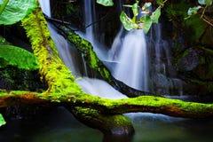 Bemoste waterval stock afbeeldingen