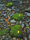 Bemoste zandsteenkeien in water van bergrivier. Ontruim vaag water met bezinningen. royalty-vrije stock afbeelding