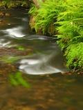 Bemoste zandsteenkeien in water van bergrivier. Ontruim vaag water met bezinningen. royalty-vrije stock foto
