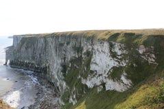 Bempton峭壁自然保护,约克夏海岸风景与盘旋由峭壁边缘的海鸟的 库存照片