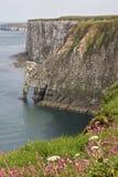 bempton απότομοι βράχοι humberside Στοκ εικόνα με δικαίωμα ελεύθερης χρήσης