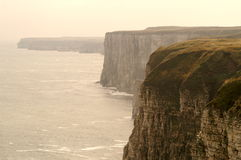 Bempton cliffs stock images
