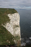 Bempton Cliffs, RSPB reserve Stock Photos
