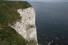 Bempton Cliffs, RSPB reserve Stock Photos