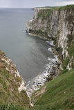 Bempton Cliffs, RSPB reserve Royalty Free Stock Images