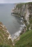 Bempton Cliffs, RSPB reserve. Yorkshire royalty free stock images