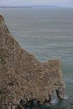 Bempton klippor, RSPB som bygga bo havssulor Royaltyfria Bilder