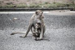 Bemuttern Sie Affen mit ihrem Baby auf der Straße in der Stadt mit dunklem Ton Lizenzfreies Stockbild
