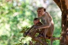 Bemuttern Sie Affen mit ihrem netten Baby mit Wald im Hintergrund Lizenzfreie Stockbilder