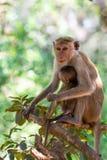 Bemuttern Sie Affen mit ihrem netten Baby mit Wald im Hintergrund Stockfotos
