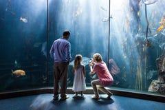 Bemuttern Sie das Machen des Fotos der Fische während die Tochter und Vater, die Aquarium betrachten Stockfotografie