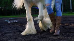 Ben av en kvinna som leder en vit häst på jordningen, ultrarapid lager videofilmer