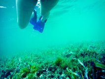 Ben av en simmare under vatten arkivbild