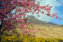Ben Buie in Springtime Royalty Free Stock Images