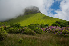 Ben Bulben, Republic of Ireland on a partly sunny day with rhododendron in the foreground. Sligo stock image