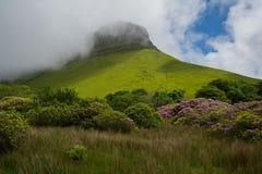 Ben Bulben Republiken Irland på en delvis solig dag med rhododendron i förgrunden Fotografering för Bildbyråer