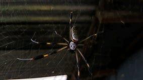 Ben för mörker för spindelskallerengöringsduk Arkivfoton