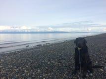 Ben liebt den Strand Stockfotografie
