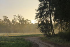 Ben Shemen Forest in the Judea Hills, Holy Land, Israel Stock Photography