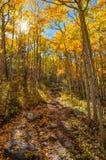 Ben Tyler Autumn Trail Royalty Free Stock Photo