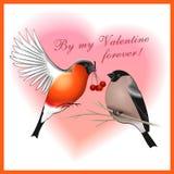 Ben voor altijd mijn Valentine Stock Foto