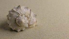 Benadering die van overzeese shell op het zand, hoogste mening liggen stock footage