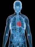 Benadrukt hart stock illustratie