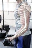 Benadrukt wapen van sterke mens het opheffen gewichten bij gymnastiek stock foto