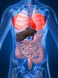 Benadrukte longen Stock Afbeeldingen