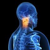 Benadrukte pijnlijke hals Stock Foto