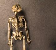 benar ur det halloween skelett Royaltyfri Bild