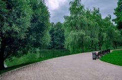Bench в зеленом парке озером стоковые фотографии rf