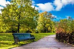 Bench в парке Стоковые Изображения RF