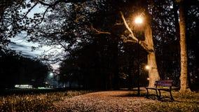 Bench в парке Стоковые Изображения