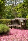 bench деревянное стоковые изображения