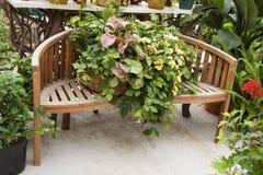 bench дисплей деревянный Стоковое Изображение