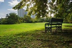 Bench публично парк с тенью зеленых дерева и лужайки Стоковые Изображения RF