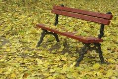 bench упаденные листья Стоковые Фото