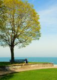 Bench. And tree by Lake Michigan, Chicago Stock Images