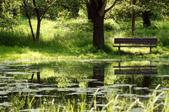 Bench. In the green one at a pond Stock Images
