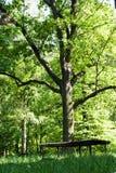 Bench Royalty Free Stock Photos