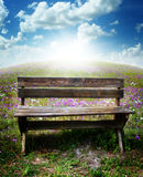 Bench. A simple wooden bench in a field with flowers and bright sunlight on the horizon Stock Photo
